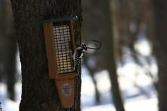 20100306_01039 (inajeep) Tags: canon woodpecker feeder pa poconos tamron suet 2010 30d 14x 200500mm