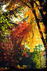 107. Convection (prenetic) Tags: blue autumn trees light sunset red orange sun white black building green fall colors leaves yellow work dark evening washington office cool seasons bright path trail microsoft redmond change bushes tbyrd