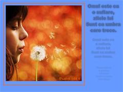 Psalmi 144-004 (Palosi Marton) Tags: kids childrens copii crestine versete biblice