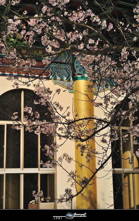 Sakura sunny 17