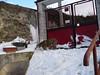 Dick sulla montagna di neve