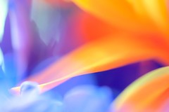 make it through the day (dan [durango99]) Tags: pink blue red orange white abstract macro yellow for petals spring waiting purple twist abstraction tamron 90mm