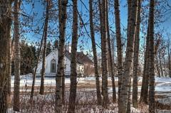 Through the woods (NormanPeters) Tags: blue winter sky snow canada tree church spring nikon edmonton alberta birch hdr d300