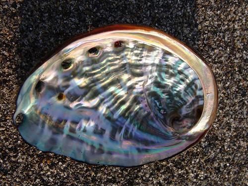 アワビの貝殻 画像