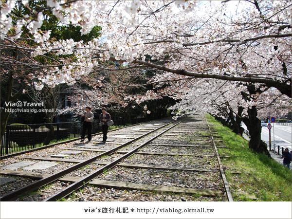 【via京都賞櫻行】鐵道上的櫻花美景~蹴上鐵道10
