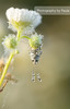 Just Hanging :) (Morphicx) Tags: sun sunlight flower dutch sunrise butterfly droplets drops drop 100mm dew droplet 5d sundew deventer ilovebokeh