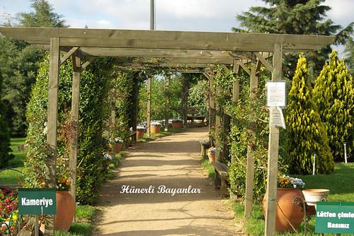 botanik2007-16