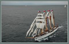 Bicentennial regatta (fenicio84) Tags: ocean chile sea mar sails paso regatta drake passage regata esmeralda veleros capehorn océano bicentenario cabodehornos