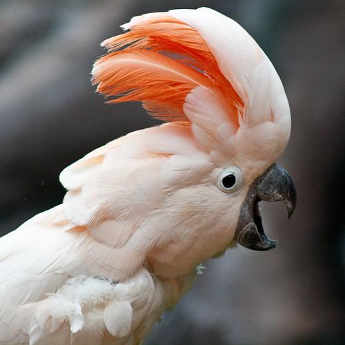 Macaw #4