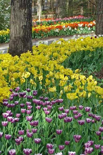 Garvin Woodland Gardens 6