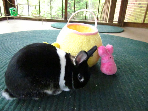 Oreo playing on Easter.