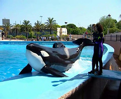 Kim 2 (valentin666) Tags: 2 kim orca antibes marineland shouka orque