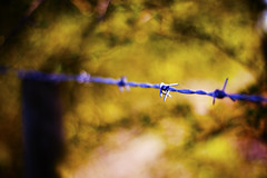 (LindaScannell) Tags: wire bokeh f14 barbed
