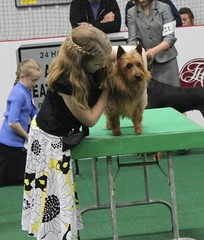 Beckham Best of Breed shown by Ellie!