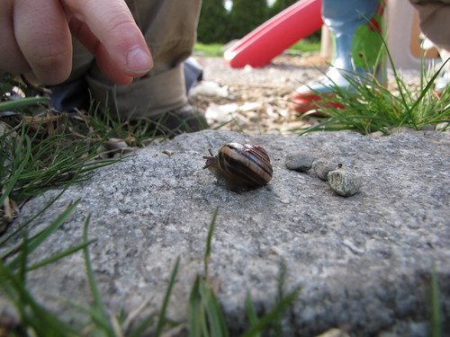 let snail season begin