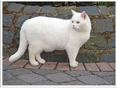Besuch von Nachbars Katze Morpheus - visit from the neighbor's cat Morpheus