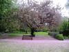 IMG_2929 (shame00) Tags: cadogangardens may2010 may12010