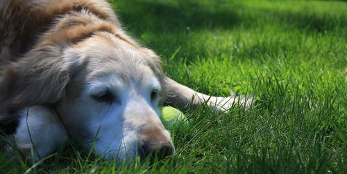 Carmel and the Tennis Ball