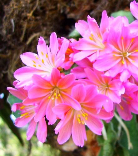 Unidentified Fabulous Flowers
