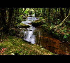 Mundora Creek (whoops vision) Tags: trees water leaves creek river nationalpark moss rainforest rocks springbrooknationalpark superaplus aplusphoto mundoracreek