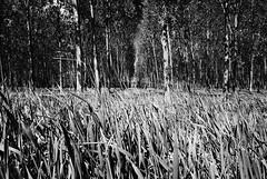Caos ordinato (Oriana Milani (poco tempo)) Tags: trees bw white black nature grass alberi landscape nikon natura bn erba bianco nero paesaggio yellowfilter d80 filtrogiallo tokina1116