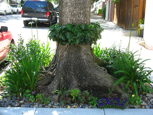 A cute thing to do with...Algerian ivy. I saw this today in the Castro.