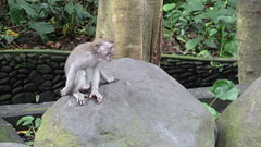 P1000472 (jengillen) Tags: travel vacation bali indonesia zoo monkey asia tropical ubud kuta denpasar