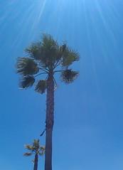 Let the sun shine on me (Irishredhead) Tags: california may palmtrees 2010 irishredhead