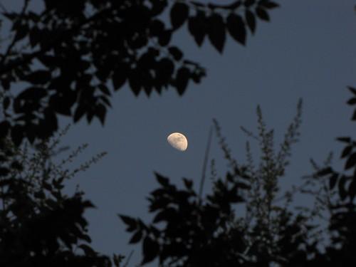 5-22-10 Moonrise