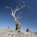 Taklamakan - dead tree