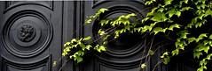 Haus im Frühling - house in spring (Manuela Salzinger) Tags: door house spring wine haus tür wein frühling