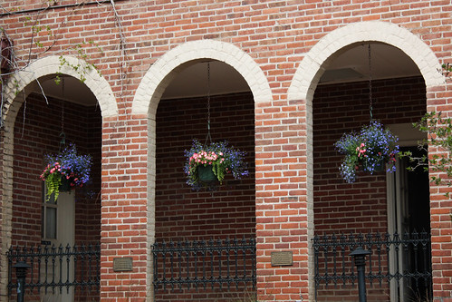 Flowers in the Arches