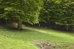Camposecco_MG_8610 (candido33) Tags: roma alberi natura lazio appennino bosco doline faggi montisimbruini carsismo cameratanuova camposecco parconaturaledeimontisimbruini faggete altopianodicamposecco