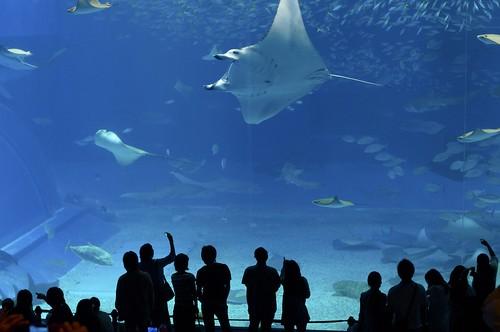 Churaumi Aquarium - Great Pool