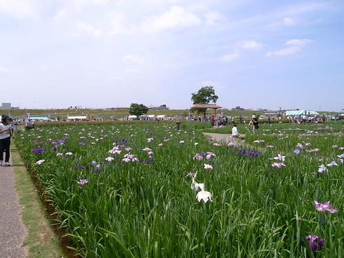 20100606_葛西臨海公園と小岩菖蒲園