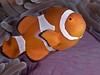 Western clown anemonefish_PCF7053 (Paul Flandinette) Tags: ocean nikon underwater philippines sealife cebu anemonefish marinelife oceanlife underwaterphotography moalboal falseclownanemonefish westernclownanemonefish beautifulfish amphiprionoccellaris paulflandinette