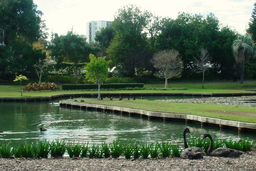 Perth - Queen's Park - Black swans