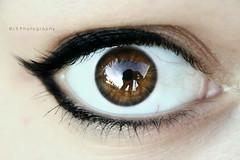 Paura mista, stupore. ([L] di .zuma) Tags: self mio mascara occhio eyeliner riflesso iride rimmel pupilla ciglia