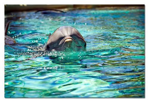 dolphin grin