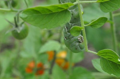 20100615 Caterpillar 011