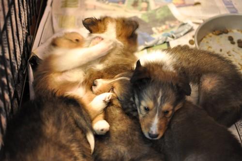 Pile o' Pup