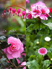 20100327_ArtKnappsFlowers-2