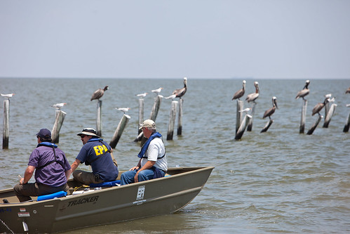 EPA Employees Observe Sea Birds in Dauphin Island