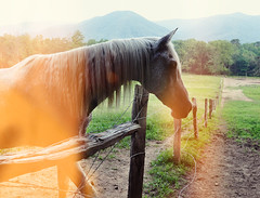 caballo (yyellowbird) Tags: summer horse mountains lights tennessee country gatlinburg greatsmokymountains