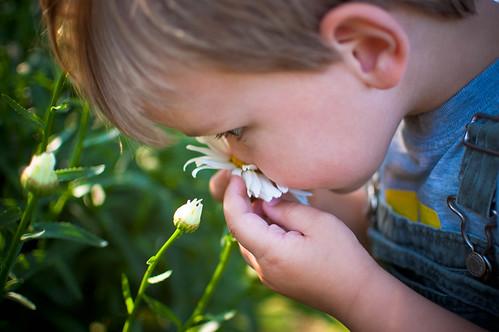 484:1000 Lucas loves daisies