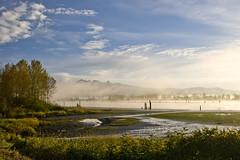 Pitt River Morning 4 (showbizinbc) Tags: mist fog sunrise river golden britishcolumbia mapleridge portcoquitlam pittriver pittmeadows mistymorning
