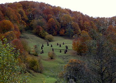 domboldal / brae (debreczeniemoke) Tags: autumn forest hill rick stack brae transylvania transilvania erdély domb ősz erdő boglya szénaboglya domboldal