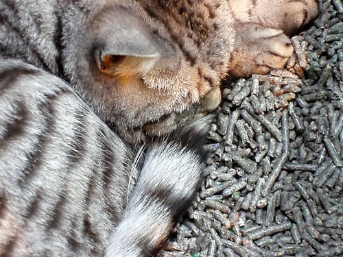 Signs of stressed cat sleeping in her litter tray