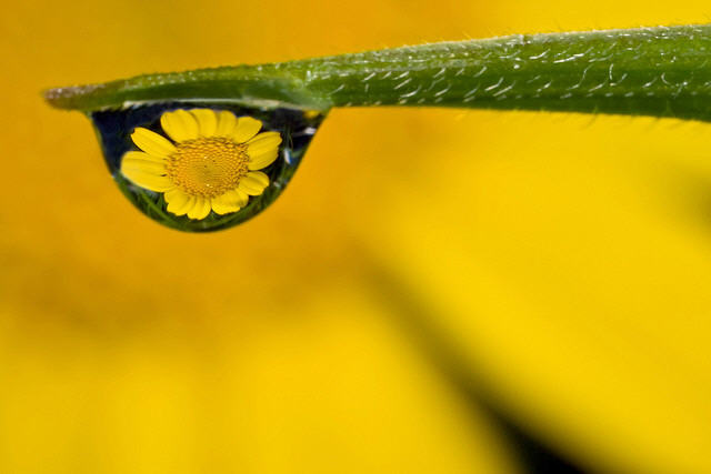 Dew Photography