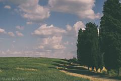(dany_bonda) Tags: nature summer estate landscape vsco panorama collina hill canon canonpotography